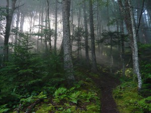 Bay of Fundy Forest