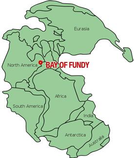 Bay of Fundy Pangaea