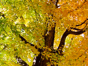 Bay of Fundy Fall Foliage