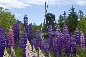 Kingsbrae Gardens Windmill