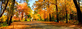 5 Reasons Why the Bay of Fundy Beats the New England Fall Foliage
