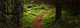 Bay of Fundy Hiking Trails